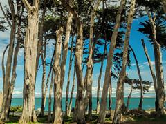 Esplanade Park (GeminEye27) Tags: park seascape montereybay cypress pacificgrove