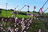 Spring time.. (fil_____) Tags: tree green nature spring nikon greece thessaloniki τοπιο ελλαδα θεσσαλονικη φυση ανοιξη δεντρο neoiepivates κηποσ περαια nikond3300 νικον νεοιεπιβατεσ
