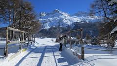Silvaplana, 11.2.16 (ritsch48) Tags: engadin silvaplana silvaplanersee winterwanderweg dameaufderbrücke