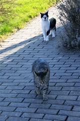Jonas und Claudia (ute_hartmann) Tags: cat claudia katze jonas kater angst perserkater