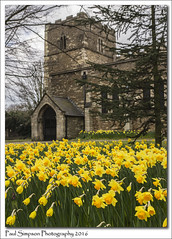 St Lawrence Church (Paul Simpson Photography) Tags: flowers plants flower tree church nature yellow petals spring religion stlawrence oldchurch naturalworld daffodils scunthorpe stonebuilding photosof imageof photoof imagesof sonya77 paulsimpsonphotography