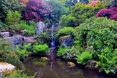 Mini Waterfall (Aurora Santiago Photography) Tags: seattle waterfall washington rhododendron ferns kubotagarden