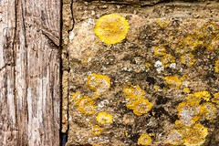 Old Cotswold Stone (Macro light) Tags: history oak broadway lichen nationaltrust cotswoldstone snowshillmanorandgarden