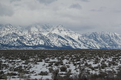 Moose in the park 3 (Aggiewelshes) Tags: travel winter snow mountains landscape scenery moose april wyoming jacksonhole grandtetonnationalpark 2016 gtnp