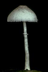 Toadstool (cheekeemonkeez) Tags: mushroom fungus toadstool lowkey terrarium a58