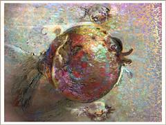 Pomegranate Fish (flynryon) Tags: hot art texture mike mobile digital portraits landscapes flickr artist expression gene pomegranate canvas odd glaze adobe kansas particle shape figures impressionist fingerpaint ryon iphone artstudio scumble mashablecom fingerpaintedit flynryon iamda ipainter beesparkt paintbookca beesflite