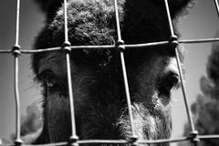 Velvet (brinksphotos) Tags: blackandwhite animals photography sad sunday donkey velvet nikond3100