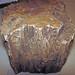 Quartz-permineralized fossil wood (Chinle Formation, Upper Triassic; Woodruff, Arizona, USA) 4