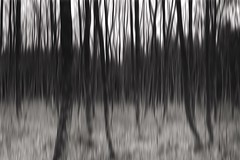 In Motion Blurred Motion Blurred Shootermag Blackandwhite Black And White Nature Trees EyeEm Nature Lover Slow Shutter (sinepix) Tags: trees blackandwhite nature blurred slowshutter inmotion blurredmotion shootermag eyeemnaturelover