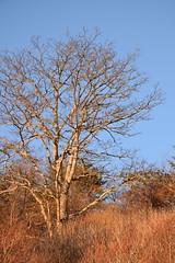 Warm Late Light (esywlkr) Tags: tree landscape outdoors nc northcarolina parkway bro blueridgeparkway wnc waterrockknob
