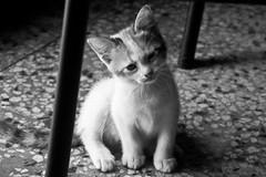 Kitty b/w (Jaime Recabal) Tags: blackandwhite blancoynegro monochrome canon kitty recabal 40d