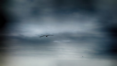 Clouds1 (Jean McLane) Tags: sky clouds seagull ciel cielo nuages gaviota nuves