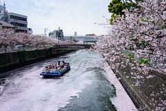 Cruise through flowers (H.H. Mahal Alysheba) Tags: flower water japan zeiss river cherry landscape tokyo nikon ship wide cherryblossom sakura d800 distagon carlzeiss 28mmf2