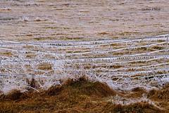 DSC_1088_135 (Jeffery A. Smith) Tags: ice lines fence nikon icestorm northdakota barbwire freezingrain fenceline bottineau d3300