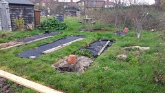 Might get up to 5 beds this year (Dan K ) Tags: allotment walthamstow