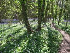 IMG_0182 (Joy Shakespeare) Tags: uk coventry woodlandtrust allesley elkinwood