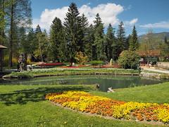 mozirski-gaj_53 (carlo) Tags: flowers olympus slovenia slovenija fiore botanicalgarden omd em1 ortobotanico giardinobotanico mozirje mozirskigaj