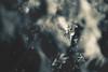 Wonderer #22 (rhendi.rukmana) Tags: life sky blackandwhite sunlight abstract nature monochrome canon wonder leaf bnw wonderer
