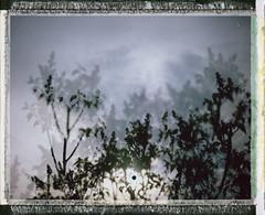 Penumbra 2 (Joann Edmonds) Tags: blue trees film nature polaroid outdoors soft doubleexposure pastel branches lilac instant fujifilm dreamy expired dreamscape packfilm 2011 polaroidweek fp100c messyborders roidweek peelapartfilm polaroidland450