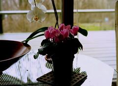 mamiya m645 (bluebird87) Tags: flowers house mamiya film table kodak epson 100 v600 ektar c41 m645 dx0