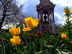 Kingsday (Thijs Tennekes) Tags: park blue cloud flower holland green fountain netherlands amsterdam yellow clouds king tulip gras sarphatipark sarphati 2016 kingsday