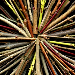 57250.25 twigs (horticultural art) Tags: stems buds twigs starburst horticulturalart