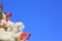 C'est le printemps, j'arrive ! (Pi-F) Tags: blue sky white flower primavera fleur azul plane spring flor himmel blumen bleu blanca ciel cielo arrival blau blanche flugzeug avin printemps avion arrive frhling  llegada weis ankunft flickrfriday