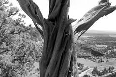 Tree (samdabull) Tags: olympus om1 oly 50mmlens 35mmcamera