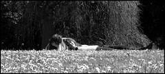 Loving break (lhoteln) Tags: flowers people blackandwhite white paris france nature fleurs noir break noiretblanc lovers pause et parc blanc personnes blackand gens amoureux bagatelle bordure