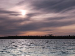 Lone gull (deanspic) Tags: sunset gull stlawrenceriver 12100 g3x photopaddle 100paddles
