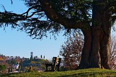 Fagagna (Sergio '75) Tags: park winter italy parco tree tower sergio canon bench landscape eos europe italia torre albero inverno paesaggio friuli panchina fagagna 70d canonef2470mmf4lisusm feagne canoneos70d sergio75