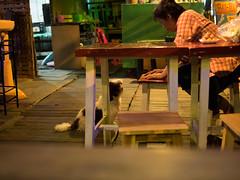 P1143290 (tatsuya.fukata) Tags: dog animal bar thailand buri samutprakan