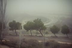 Niebla (Juanedc) Tags: city trees winter espaa mist cold fog spain plantas arboles ciudad zaragoza aragon invierno es neblina niebla saragossa depositos valdespartera
