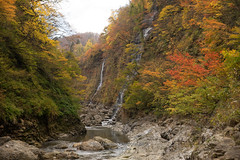 紅葉渓谷. (bgfotologue) Tags: travel autumn light red hk rain japan canon landscape photography hongkong photo waterfall leaf image outdoor sony momiji valley 日本 onsen imaging kouyou 紅葉 秋 香港 hotspring maples northeast 旅行 東北 akita 秋田 a7 風景 湯 redleaves 溫泉 光 楓葉 moist 滝 港 渓谷 温泉 影 2015 楓 雨 攝影 bgphoto 陰 風光 秋季 湯滝 地獄 露天 硫黄 湯沢 戶外 川原毛 500px 峽谷 tumblr 野湯 川原毛地獄 fbpage 強酸性 bellphoto 湯澤 kawarage 橫手