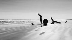 They might be giants (John Getchel Photography) Tags: ocean blackandwhite beach us texas unitedstates corpuschristi oldtree padreisland nationalseashore
