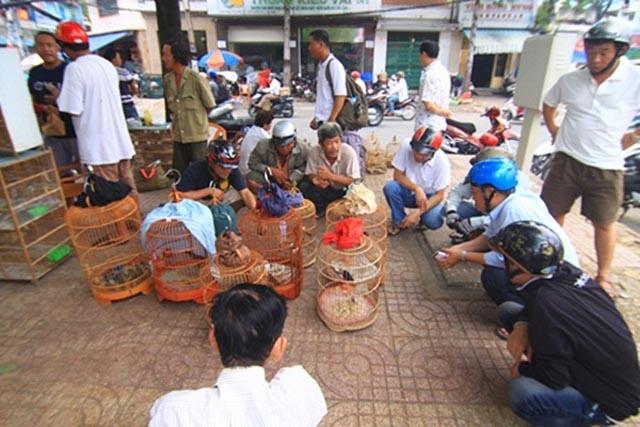 Chợ sâu bọ