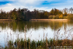 WimEst_DSC5148 (Nick Woods Photography) Tags: trees sky lake water clouds reeds landscape cloudy nt bluesky greenery nationaltrust cloudysky freshwater lakescene waterscape waterreflections wimpole wimpoleestate waterscene wimpoleestateandhomefarm