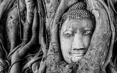 Inside (Plu80) Tags: travel bw white black tree canon that temple blackwhite ancient ruins head buddha bn inside wat maha thailandia capodanno ayutthaya rovine tempio 2016 600d