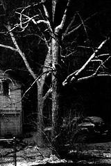 Scary (imjackhandy) Tags: morning snow tree dark scary haiku knoxville walk tennessee 575 theothermorning meadowlarklane theothermorningitstartedtosnow