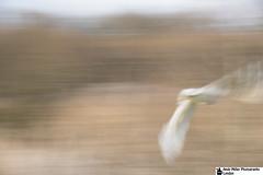 _B013865-Edit-Lighter1 (ajm057) Tags: green barn flying owl unprocessed