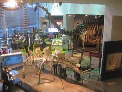 IMG_4265 (FigmentJedi) Tags: minnesota dinosaurs sciencemuseumofminnesota