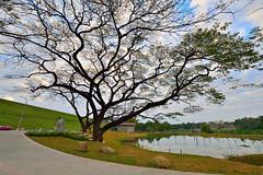 DSC_4536 (david linson) Tags: trees beautiful taiwan