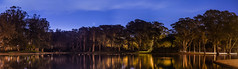 spreckels lake serenity (pbo31) Tags: sanfrancisco california goldengatepark park trees winter panorama lake color reflection green nature birds night nikon earth large ducks panoramic serenity bayarea february stitched 2016 outerrichmond boury spreckelslake pbo31 d810