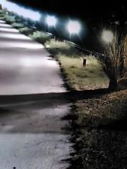 ROAD PAINTING (EL JOKER) Tags: road light blur green grass television les landscape tv paint darkness lawn gimp el screen vert pop peinture route smartphone lumiere linux joker paysage s3 herb available flou prod pelouse herbe alcatel ecran 2016 allummers