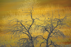 Where the Birds Are (Karen McQuilkin) Tags: trees color nature birds utah branches theawardtree wherethebirdsare karenmcquilkin