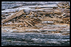 Decaying  Log, 2016.02.05 (Aaron Glenn Campbell) Tags: blackandwhite bw nature outdoors pennsylvania sony sigma textures lehman nepa bmr primelens luzernecounty backmountain backmountainrecreation mirrorless a6000 a6k emount 19mmf28exdn sonyalpha6000 ilce6000 optoutside