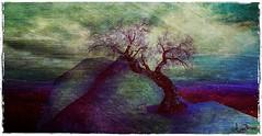 Furillen_2 (La Baroque ( Laura )) Tags: tree texture chair secondlife editing texturing furillen