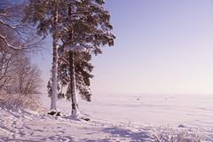 Rather...cooling (Sergei P. Zubkov) Tags: january gulfoffinland 2016 terijoki