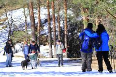 012255 - Rascafra (M.Peinado) Tags: copyright espaa dog dogs animal canon spain nieve nevada perro perros animales kdd rascafra mascota comunidaddemadrid 2016 perrodeagua valledellozoya canoneos60d 12032016 kddperrosdeagua kdd12032016 marzode2016