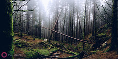 (Morning in a pine forest) (Max Ozerov) Tags: bildekritikk